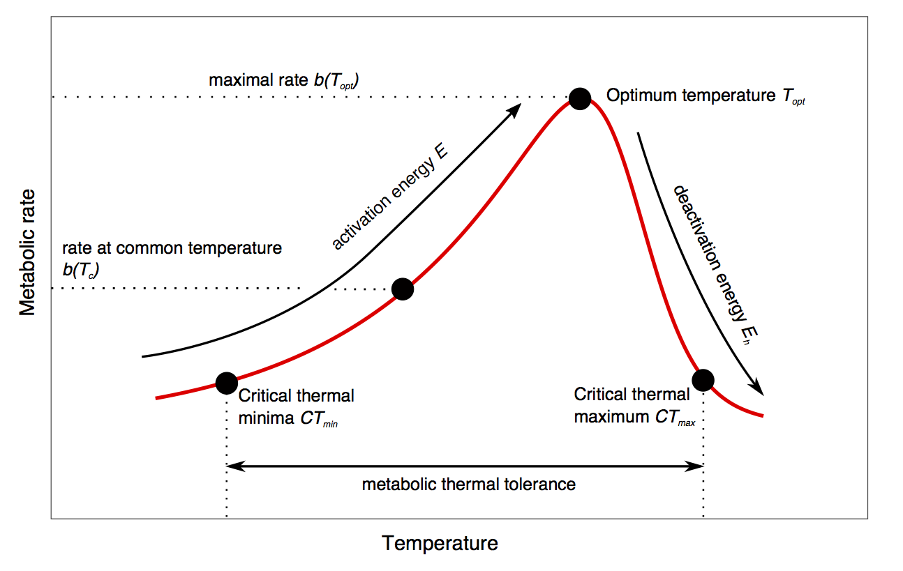 Example Thermal Performance Curve